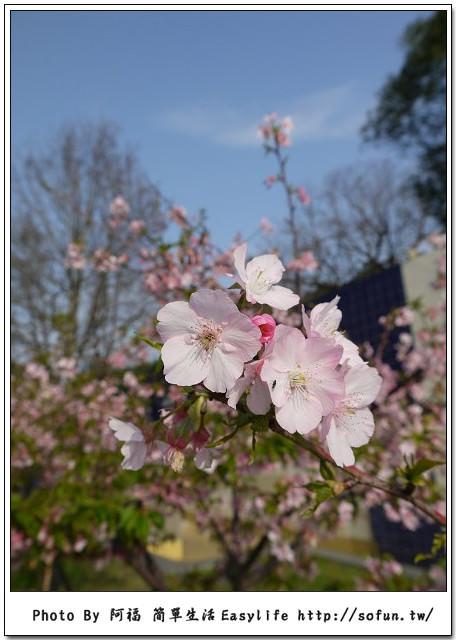 [生活] 新竹麗池公園。玻璃博物館賞櫻花、動物園隨手拍