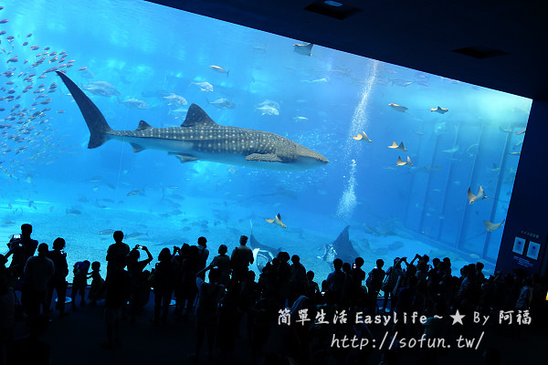 [沖繩必玩景點] 海洋博公園 & 美麗海水族館 – 亞洲最大水族館@探索絢麗海底世界