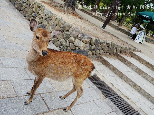 [奈良旅遊] 奈良公園 ~ 與成群小鹿玩樂@附京都到奈良交通方式