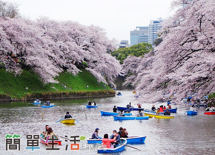 [東京賞櫻景點] 千鳥之淵、隅田公園爆開櫻花@附淺草和服體驗租借推薦